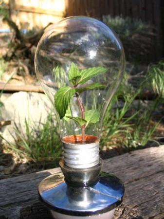 una lampadina fulminata ed alcuni semi sono sufficienti per creare una ...