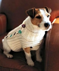 dog_sweater_240.jpg