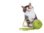 gatto, giochi, riciclo